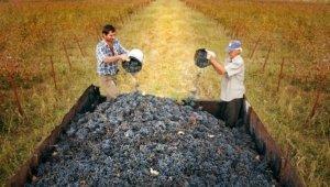 Що таке Ртвелі: усе про свято молодого вина в Грузії