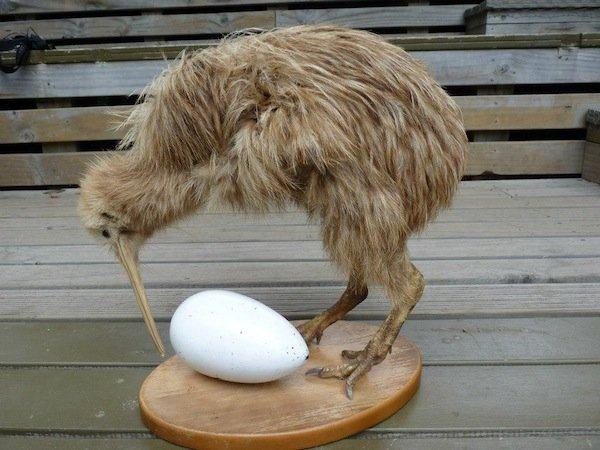 Вика Придатко в Новой Зеландии