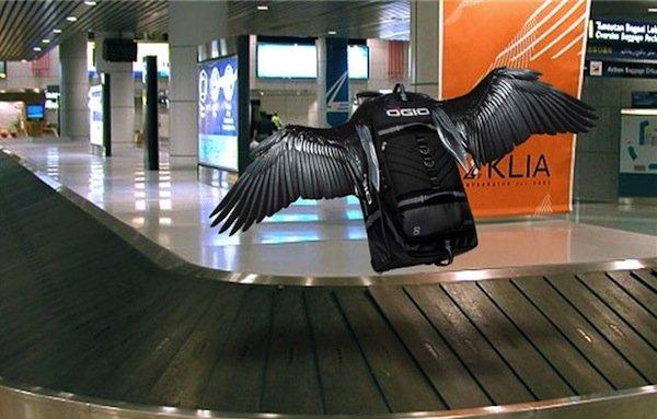 Картинки по запросу потеря багажа