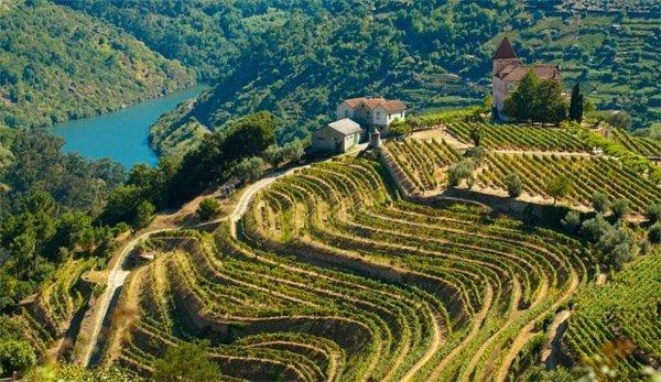 Food-фото: самые красивые виноградники мира