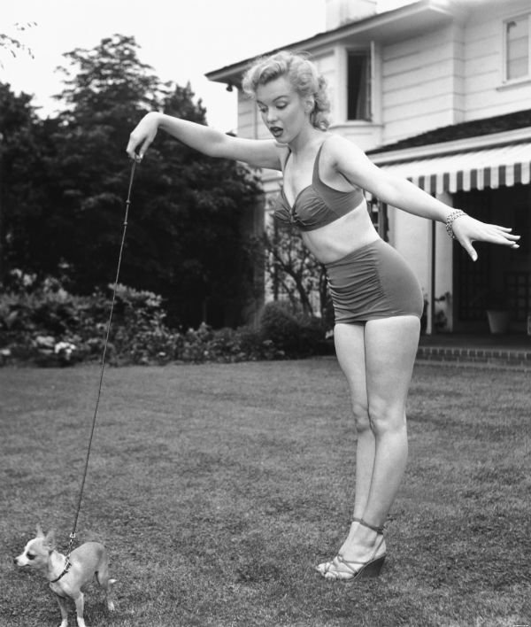 animals-blonde-dog-marilyn-monroe-retro-Favim