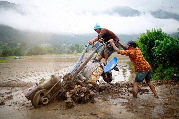 Фотоистория с фактами - рисовые поля