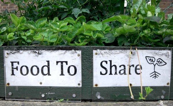 Вдохновляющее видео о еде: озеленить город может каждый