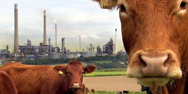 Грязь, пот и тракторы: сельскохозяйственная революция XX века (видео)