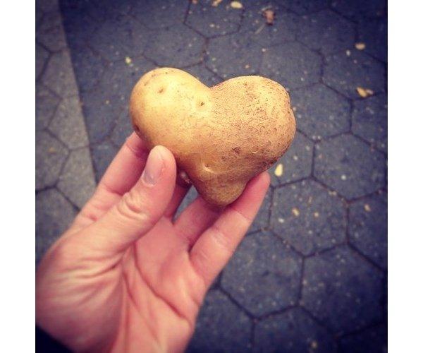 Food-фото: гастрономический tumblr байера из Нью-Йорка
