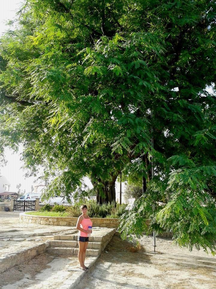 200-летнее_дерево_вКолосси