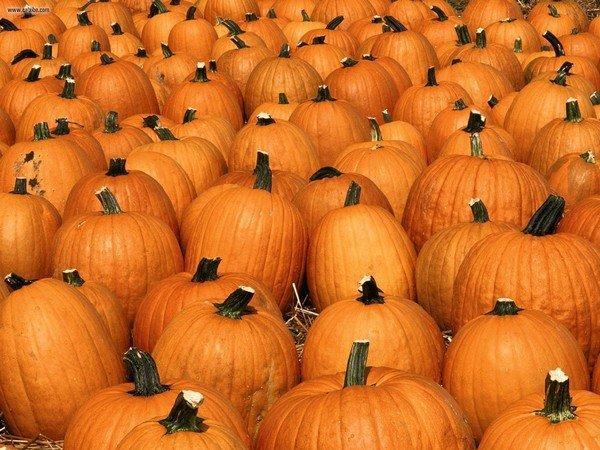 Pumpkin_Party