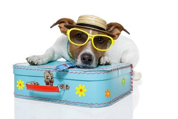 travel-dog
