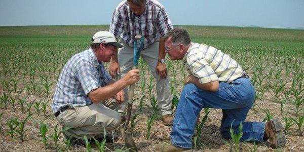 Пять фактов, которые стоит знать о ГМО