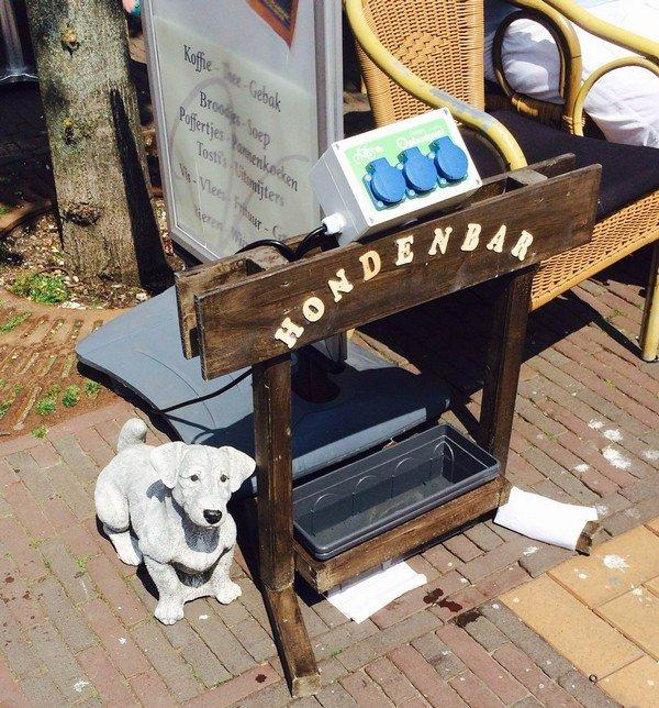 мисочка с водой для собак в кафе