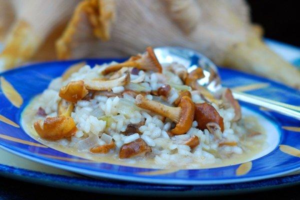 Правила грибов: 10 летних рецептов с лисичками
