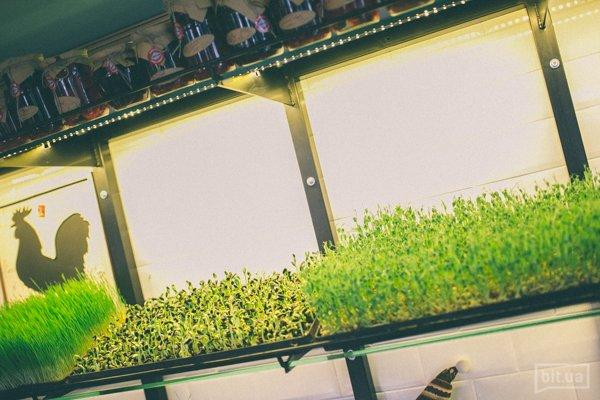 микрогрин выращивают прямо в зале. Весна всегда