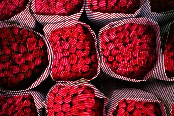 bangkok-roses_1647_600x450 (1)