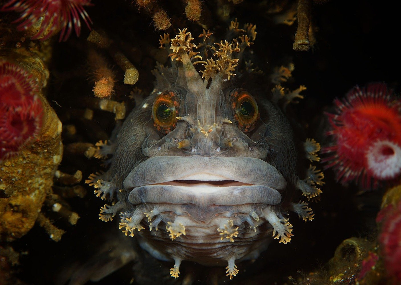 university-miami-underwater-best-overall-01