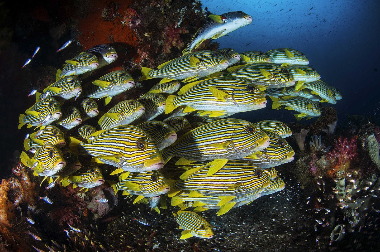 university-miami-underwater-wide-02