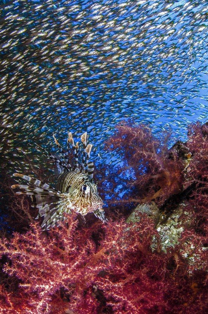 university-miami-underwater-wide-03