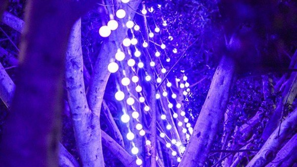 Vivid Sydney 2015_Murray Street Trees_The Star_BH_DNSW-15