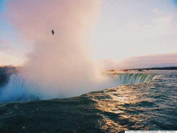 Niagara Falls Gull
