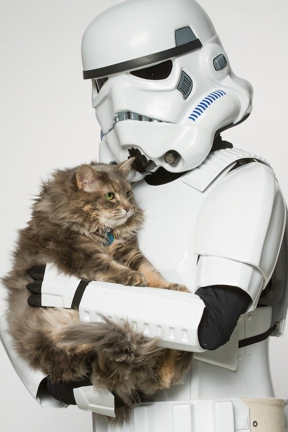 storm-trooper-and-maine-coon1