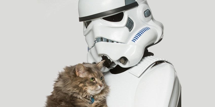 storm-trooper-and-maine-coon11
