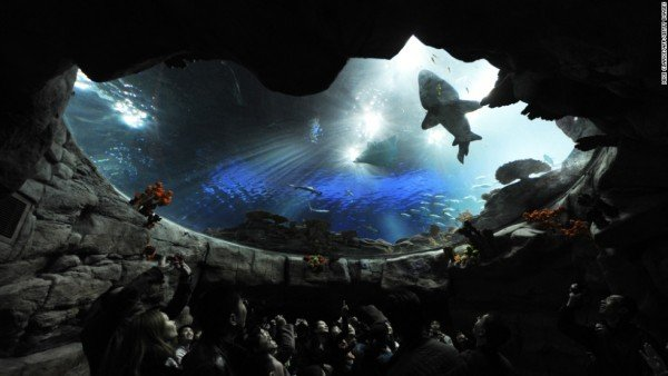 140529133030-ocean-park-hong-kong-horizontal-large-gallery