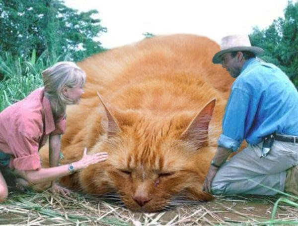 someone-replaced-all-of-the-dinosaurs-in-jurassic-park-with-cats-21-photos-1
