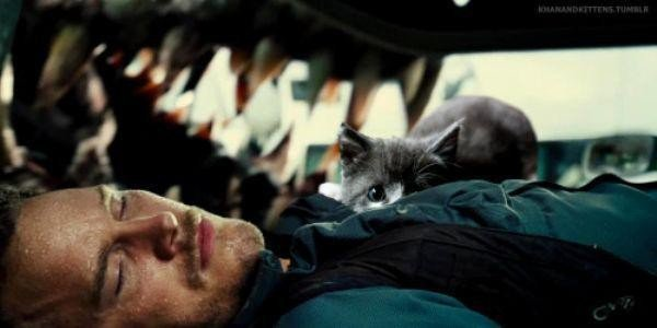 someone-replaced-all-of-the-dinosaurs-in-jurassic-park-with-cats-21-photos-13