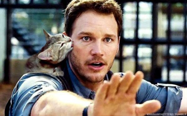 someone-replaced-all-of-the-dinosaurs-in-jurassic-park-with-cats-21-photos-20