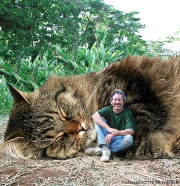 someone-replaced-all-of-the-dinosaurs-in-jurassic-park-with-cats-21-photos-8