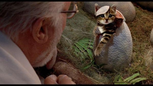 someone-replaced-all-of-the-dinosaurs-in-jurassic-park-with-cats-21-photos-9