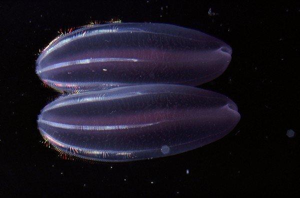 На дне: как выглядят светящиеся обитатели океанских глубин (фото)