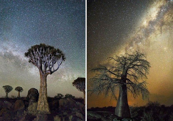 ancient-oldest-trees-starlight-photography-beth-moon-2