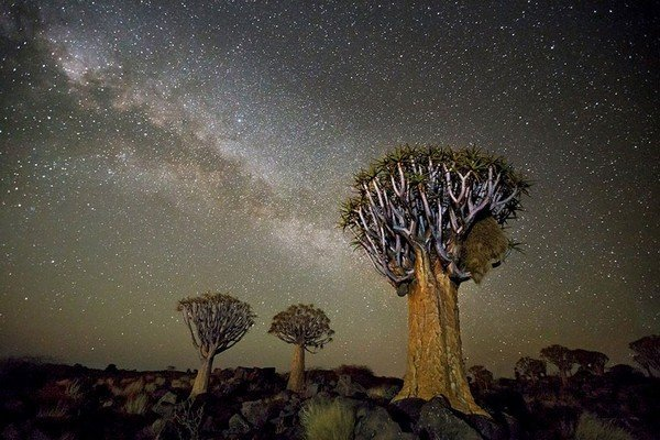 ancient-oldest-trees-starlight-photography-beth-moon-9