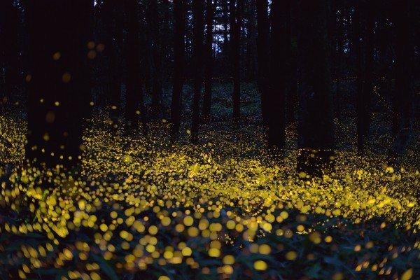 fireflies-Yuki-Saro-3