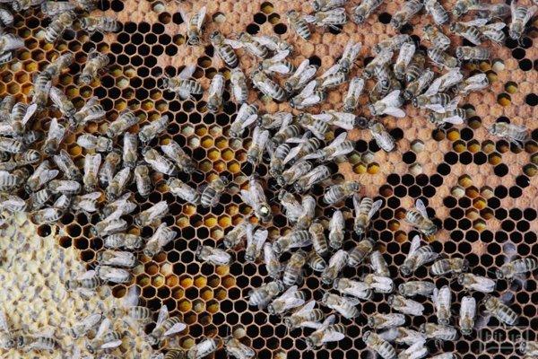 Открыть свое дело пчеловодства малиновая ферма бизнес план