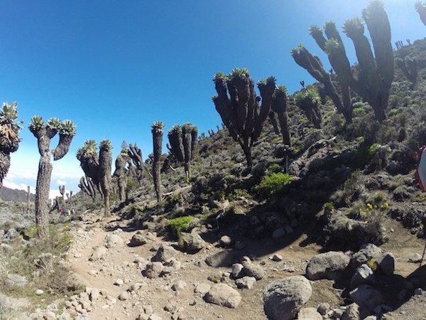 Килиманджаро. Дорога