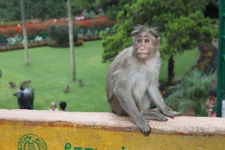 смотреть порно девочки хотят с обезьяной