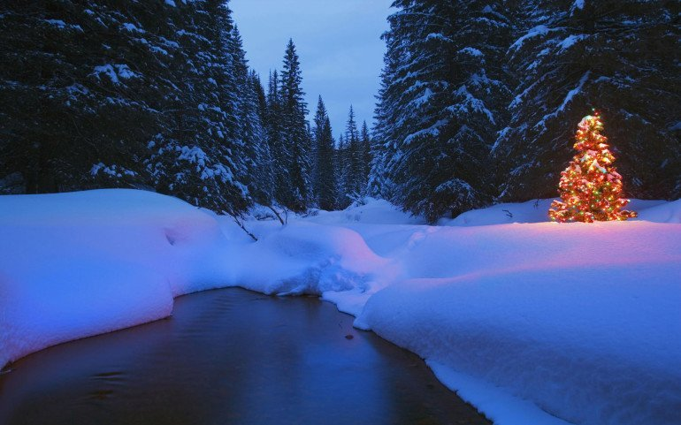 Glowing Christmas tree in forest by stream