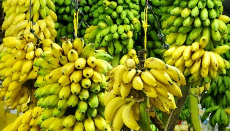 content_mnogo-bananov