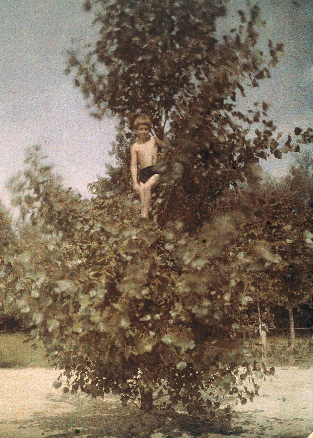 Boy in a tree, c 1920.