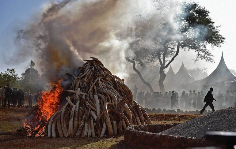 KENYA-IVORY-POACHING-CRIME-AFRICA