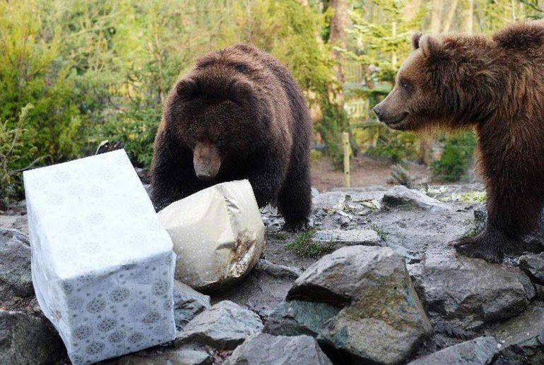 FRANCE-CHRISTMAS-ANIMALS-ZOO-GRIZZLY-FEATURE