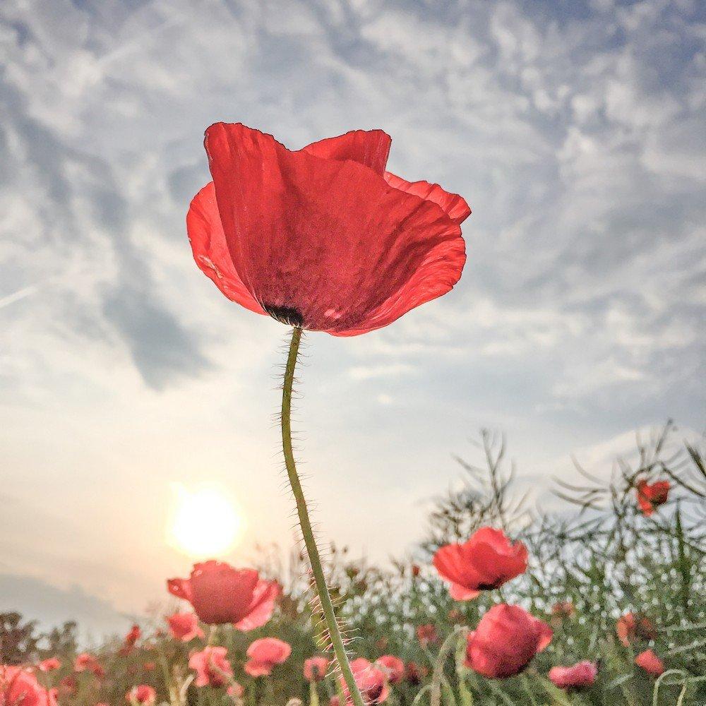 017-Lone_Bjorn-Flowers-1st