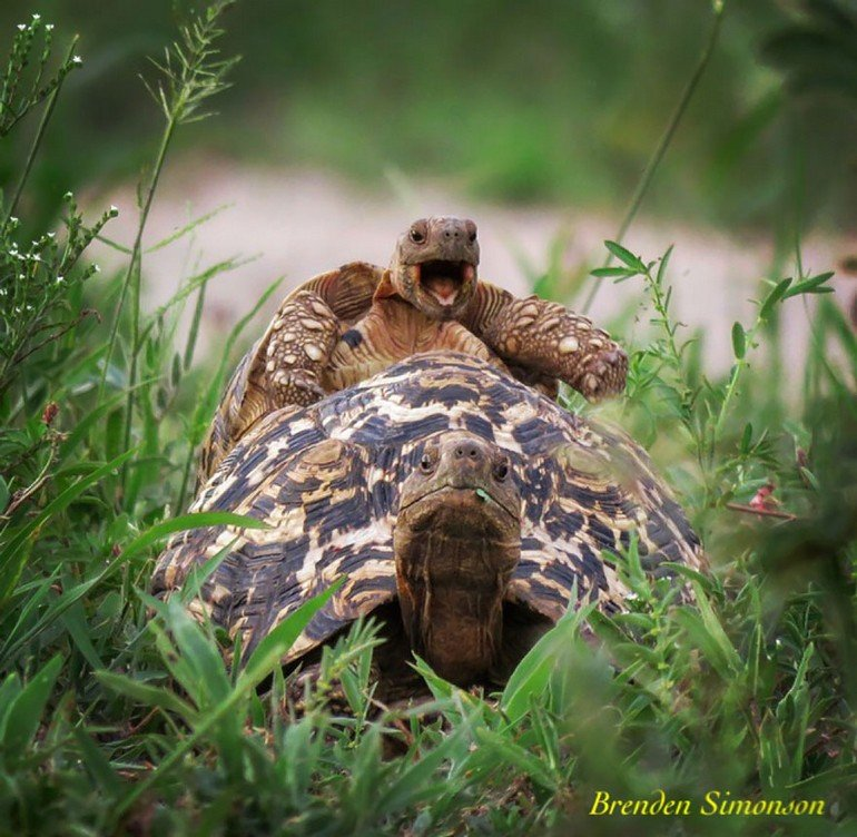 comedy-wildlife-photography-awards-2016-12-57f103b4d465c__880