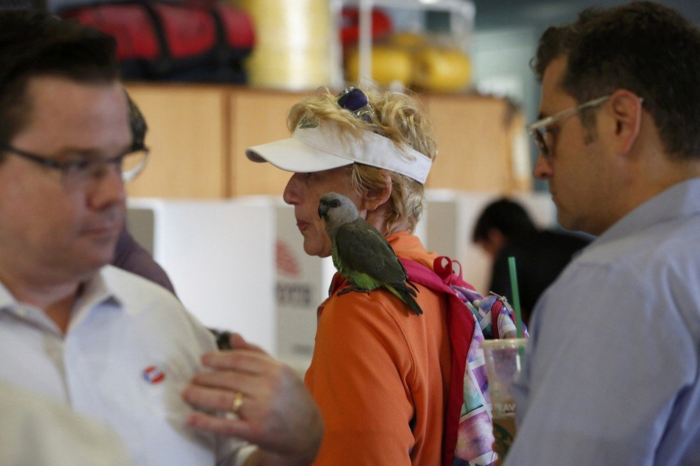 Schaper with her red-bellied parrot wait in line to receive a ballot during voting in the 2016 presidential election at the Venice Beach lifeguard station in Los Angeles, California