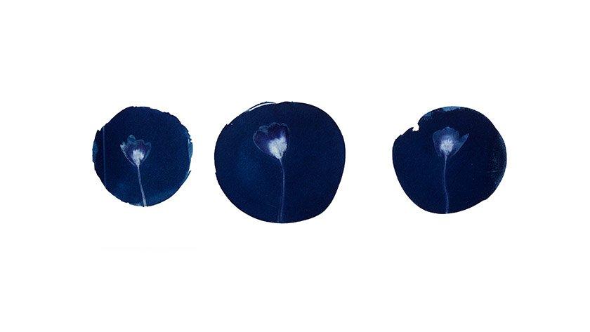 Цианотипии Ирины Глик
