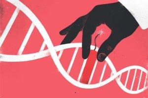 Технология редактирования генома CRISPR может повысить уровень рождаемости