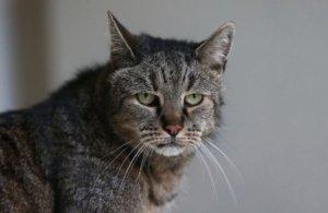 Самый старый кот в мире умер в возрасте 32 лет