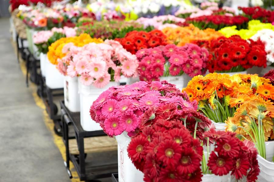 Продажа, купить цветы метро киевская