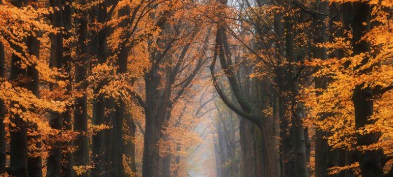 фото, фотограф, времена года, погода, природа, albert dros,